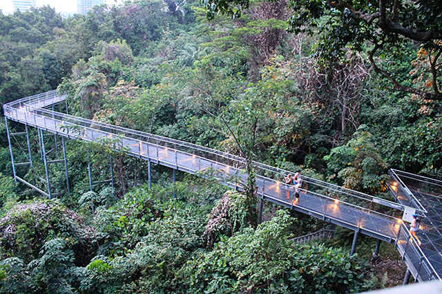 Forest Walk & Pram friendly walks |Southern Ridges Walk | HoneyKids Asia