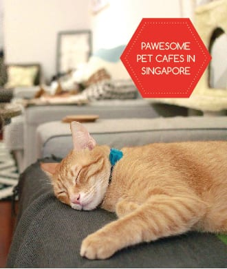 Meet a furry friend at a cat or dog cafe