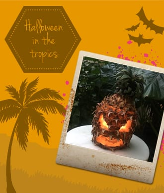 A Halloween party in the tropics