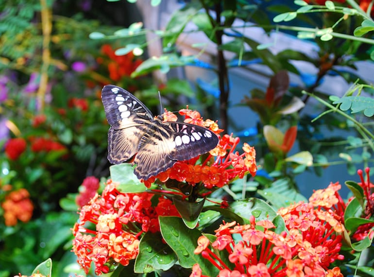 The ultimate guide to rainy and hazy day indoor activities in get up close with the butterflies at the science centres butterflies up close interactive exhibit solutioingenieria Image collections