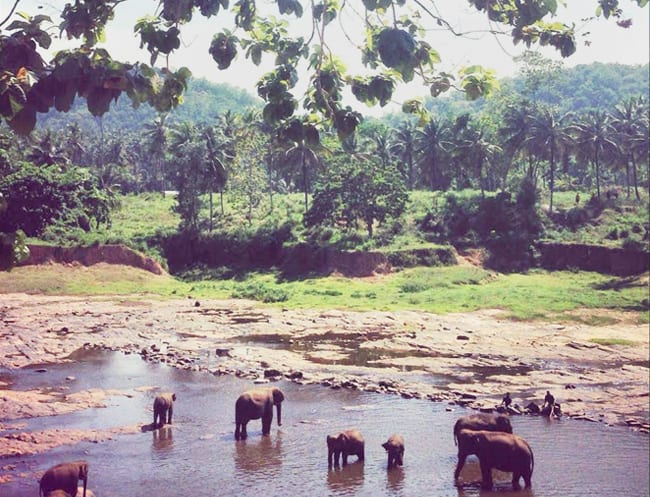 Pinnawala Elephant Orphanage is well-worth of the trip inland.