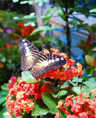 Surround yourself with butterflies at the Science Centre's new exhibit