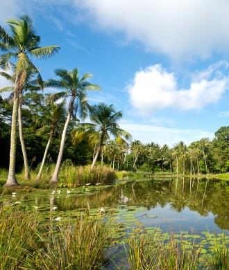 Pulau Ubin Open House: five weeks of back-to-nature fun at Pesta Ubin