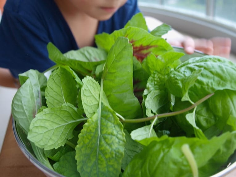 Our first harvest from our balcony garden: red amaranth, mint, kale and basil!