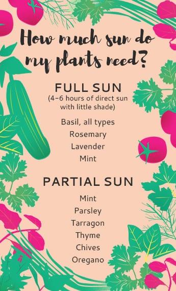 HoneyKids Urban Gardening how much sun do my plants need
