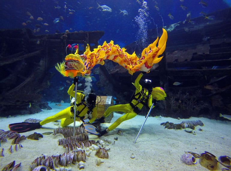 We've found an underwater dragon dance over at S.E.A. Aquarium