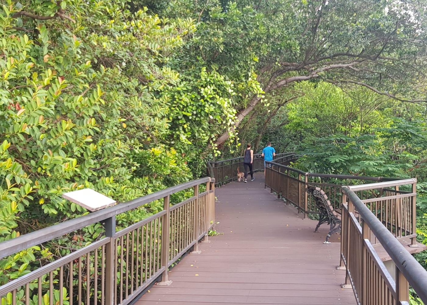 canopy walk kent ridge park