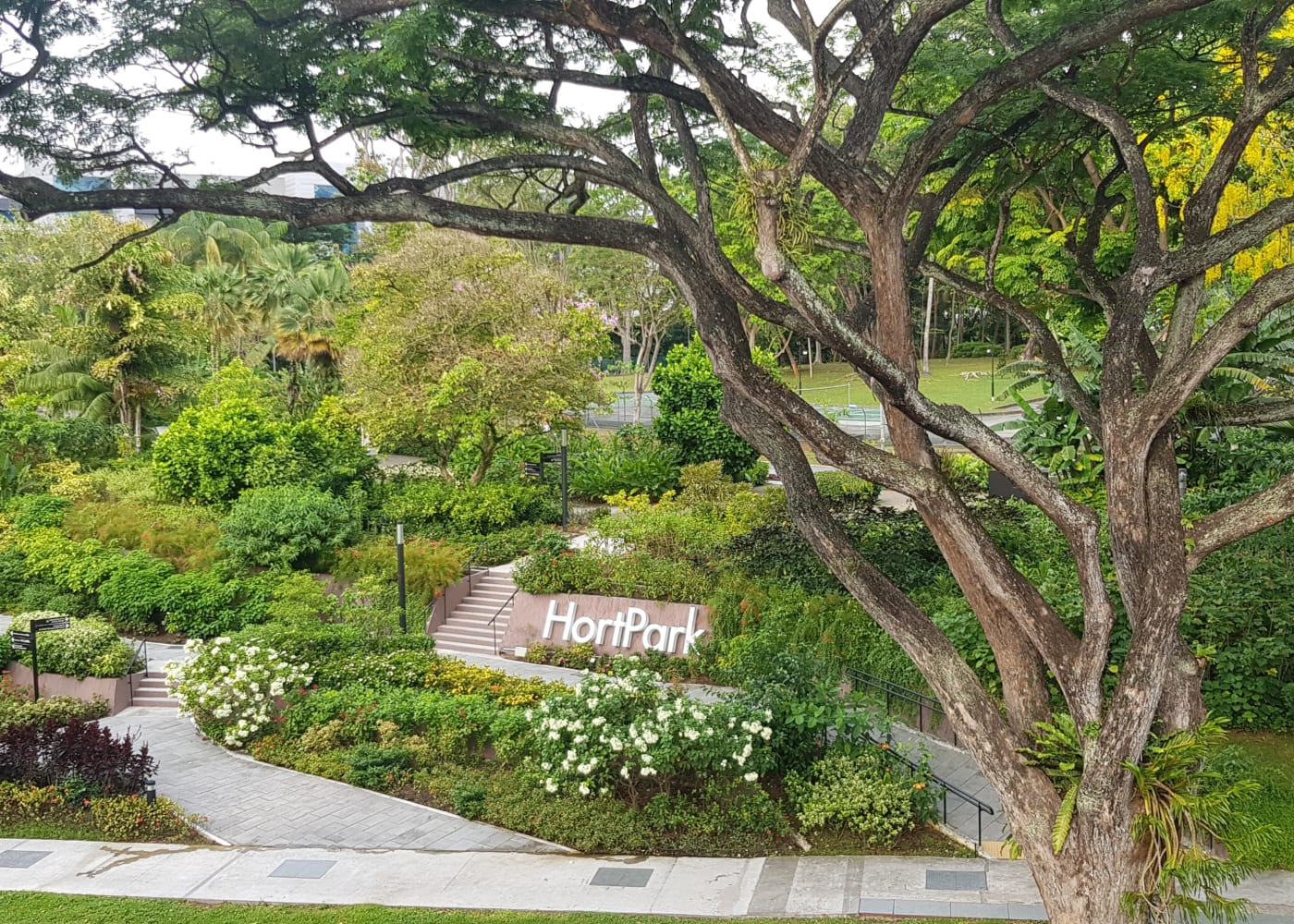 southern ridges hort park | Best playgrounds and parks in Singapore for kids of all ages
