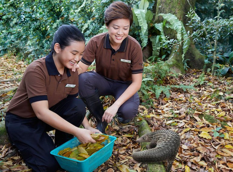Be-A-Junior-Zookeeper Honeykids Asia Singapore
