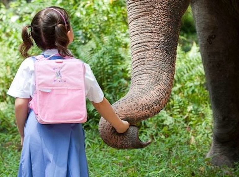 Guide to Singapore Zoo with kids: all the activities, animal