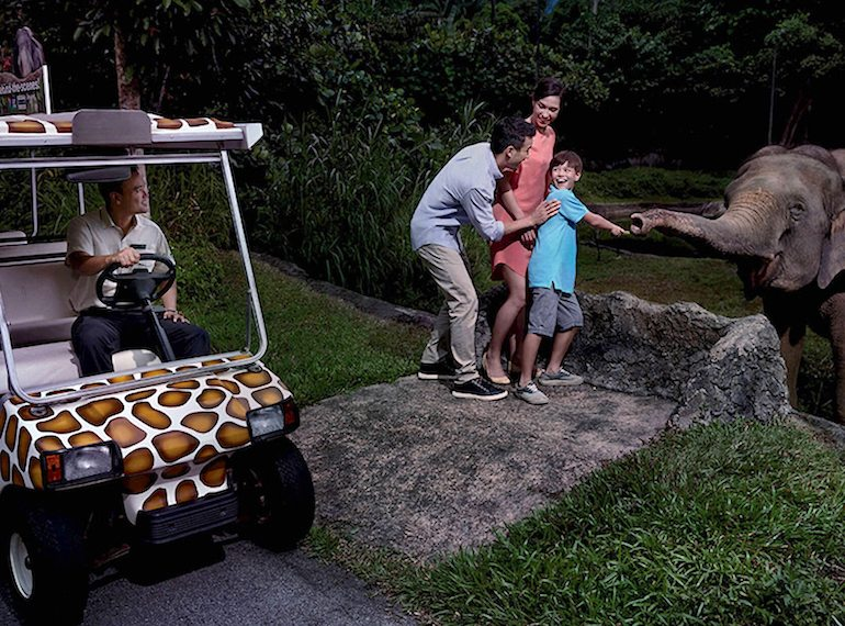 safari-adventure-tour honeykids asia Singapore