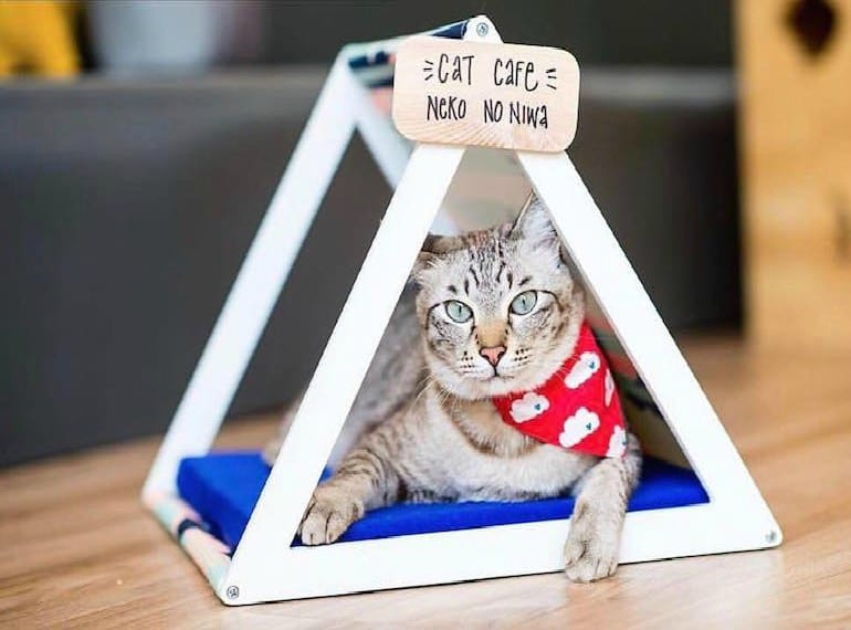 things to do for SG53 CAT CAFE