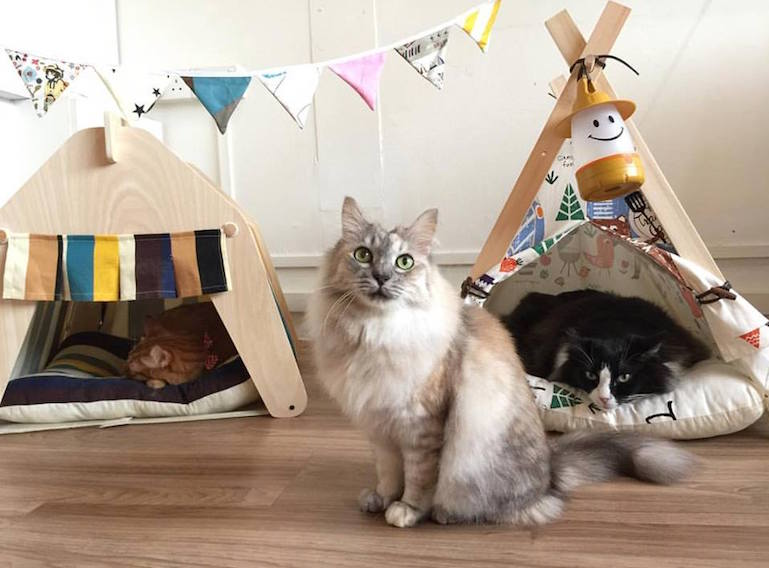cat cafes in Singapore