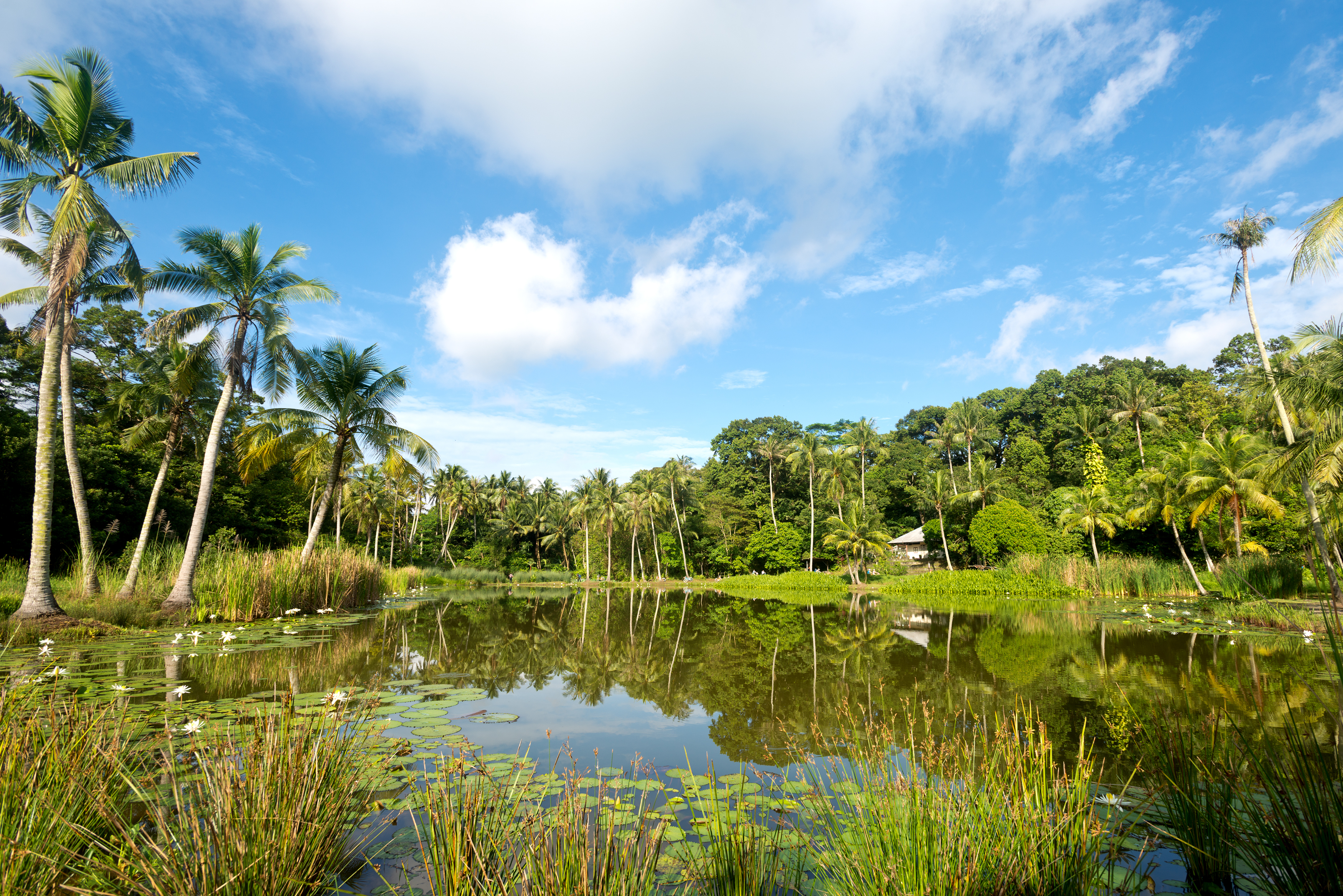 Can you believe this is Singapore? Pulau Ubin is one of our natural gems...