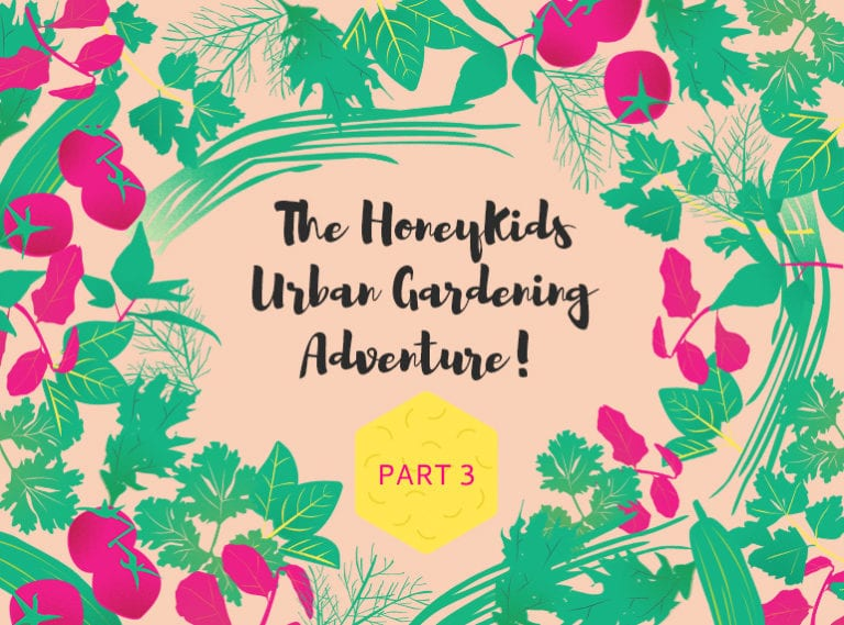 Balcony gardening tips for Singapore: The HoneyKids urban gardening project part 3 – first harvests and troubleshooting