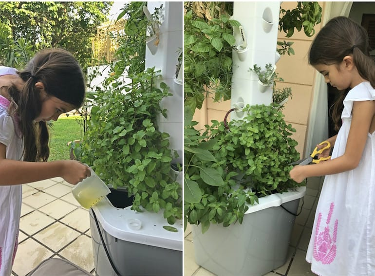 Aerospring in action with our junior gardeners.