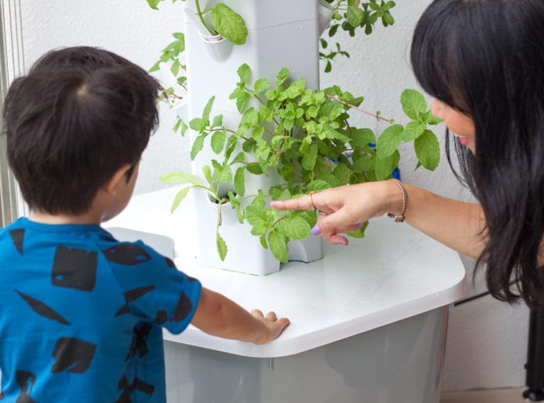 Urban gardening in Singapore: 5 reasons why we should teach city kids about gardening and growing food