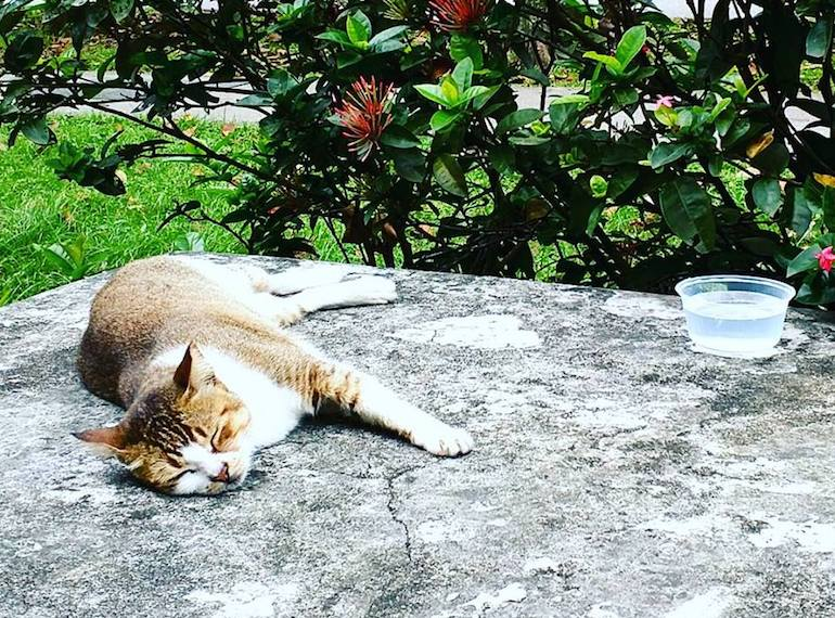 Volunteering-in-Singapore-CAT-WELFARE