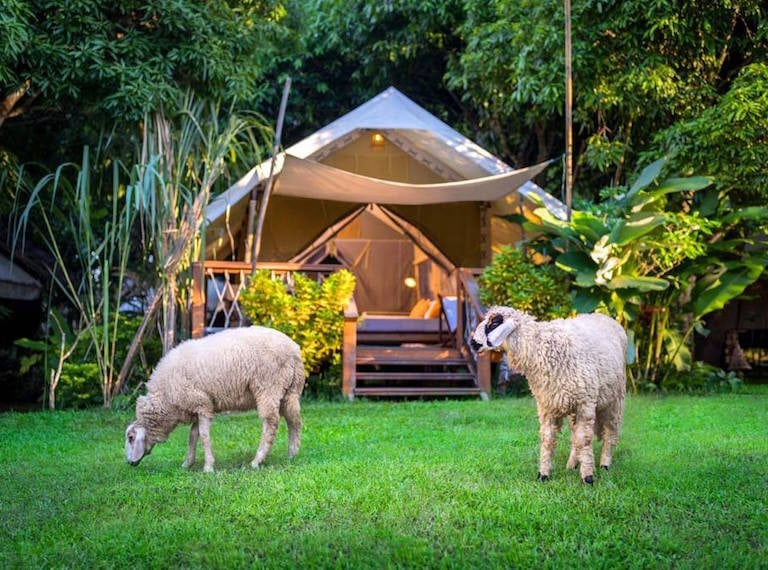 Glamping in Asia with the kids: Family adventures in the great outdoors