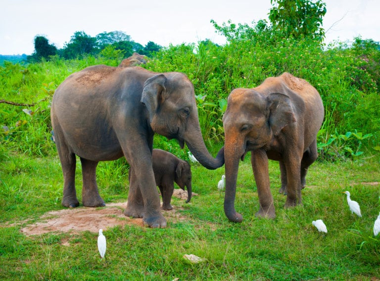 Family holiday in Sri Lanka with kids: Beaches, safari and surf – the vacay that has it all!