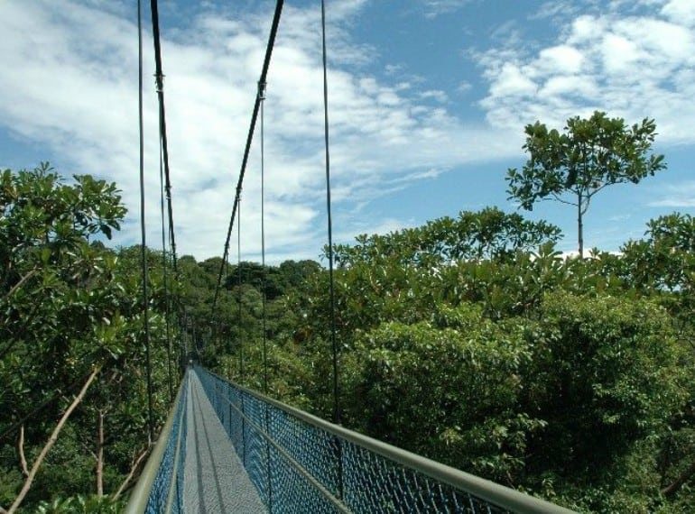 Macritchie Reservoir | Parks in Singapore