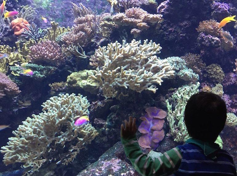 Guide to Sentosa for families: SEA Aquarium HoneyKids Asia