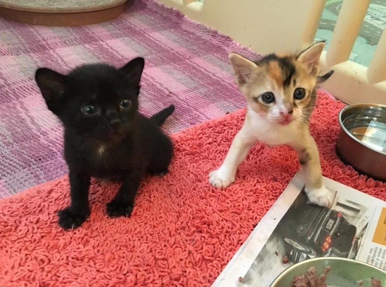Project SOKS (Save Our Street Kittens)   Where to adopt a pet in Singapore