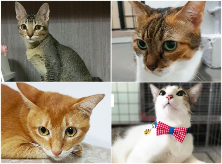 Cat Welfare Society   Where to adopt a pet in Singapore
