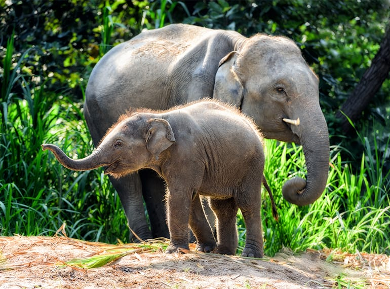 Ethical animal encounters: Where to see orangutans, elephants, and other wildlife in Asia