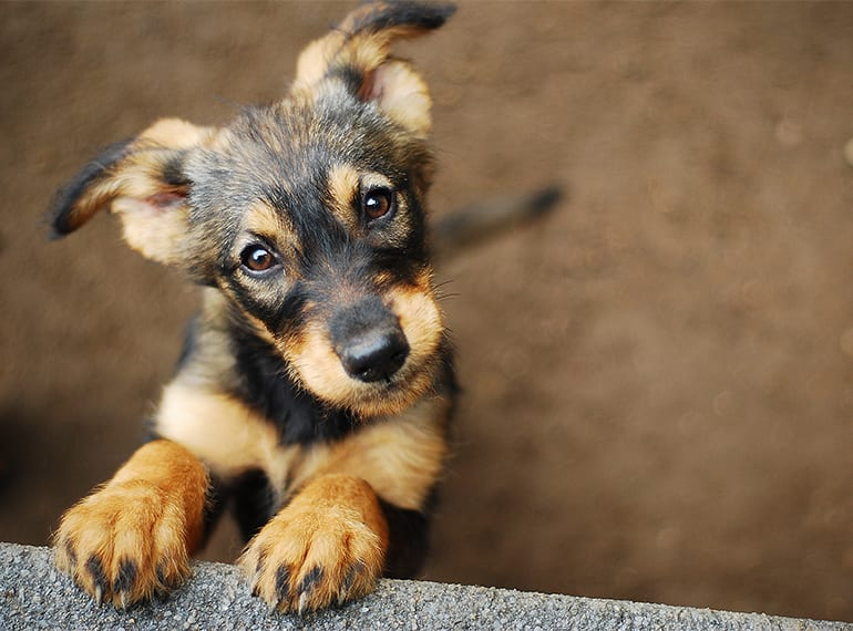 Adopting a pet in Singapore: where to rescue a dog, cat or small animal