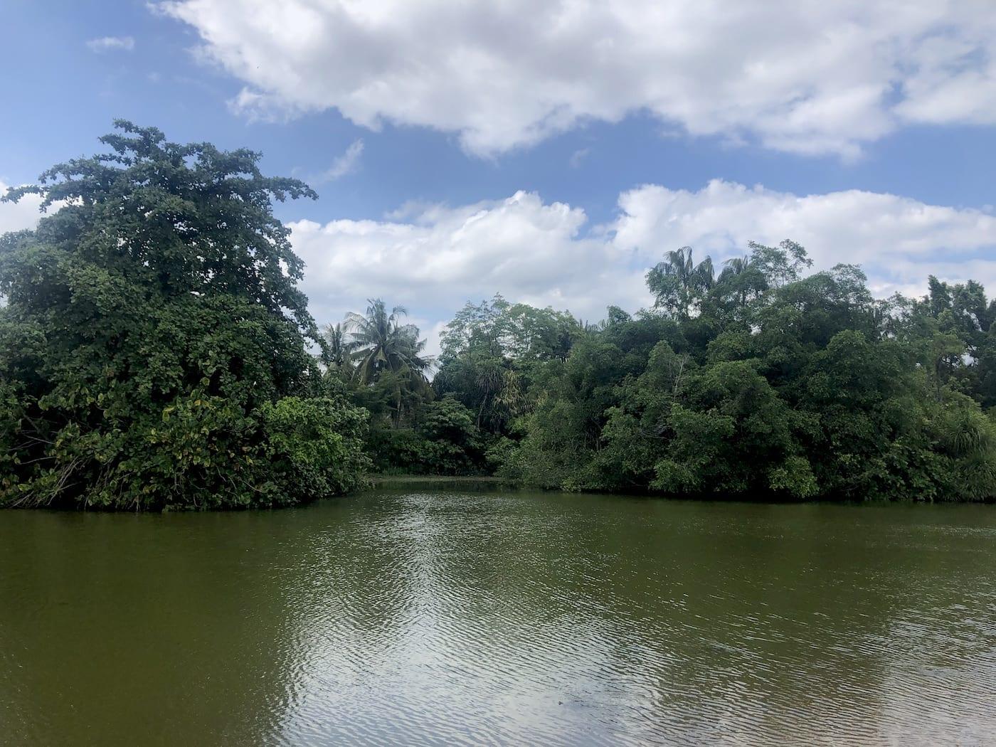 singapore botanic gardens eco lake