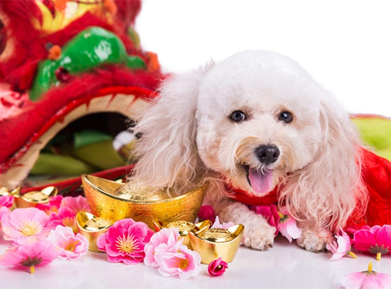 Year of the Dog: 10 fun facts you never knew about your pooch