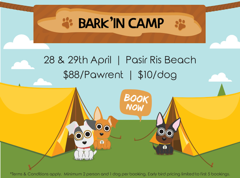 Bark'in Camp Honeykids Asia Singapore