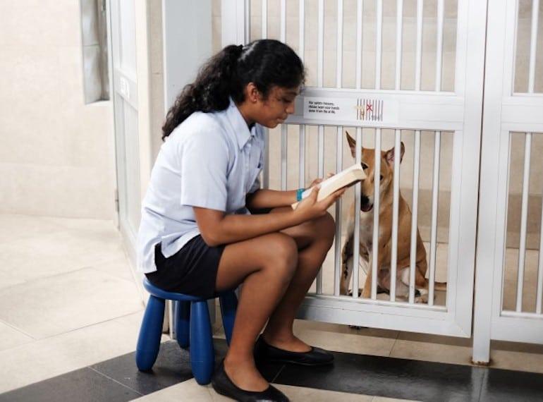Tanglin-Trust-School community service Honeykids Asia Singapore