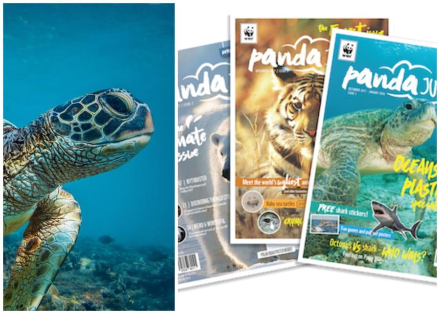 Panda Junior | kids magazines