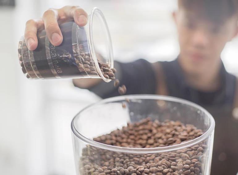 best coffee in singapore pacamara