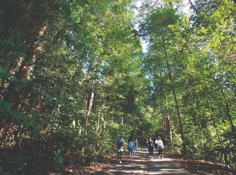 Bukit Timah Nature reserve is a great place to take the kids hiking in Singapore