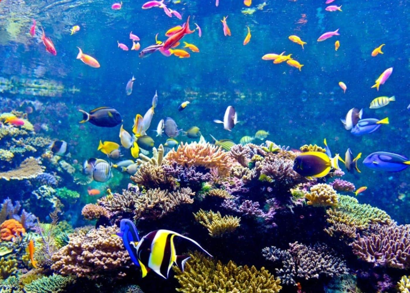 aquarium things to do with grandparents