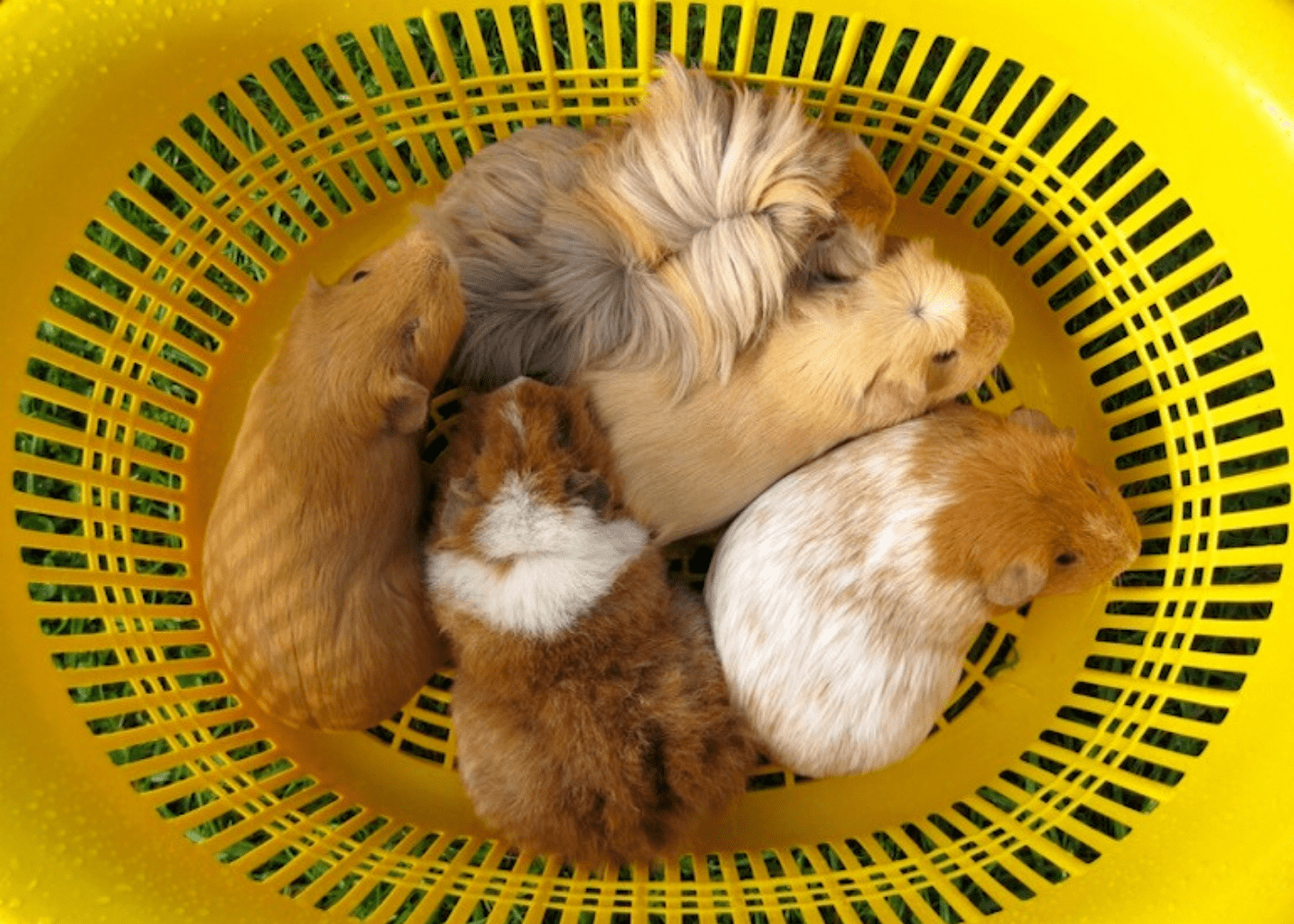 Small pets for kids in Singapore: which animals are best for children?