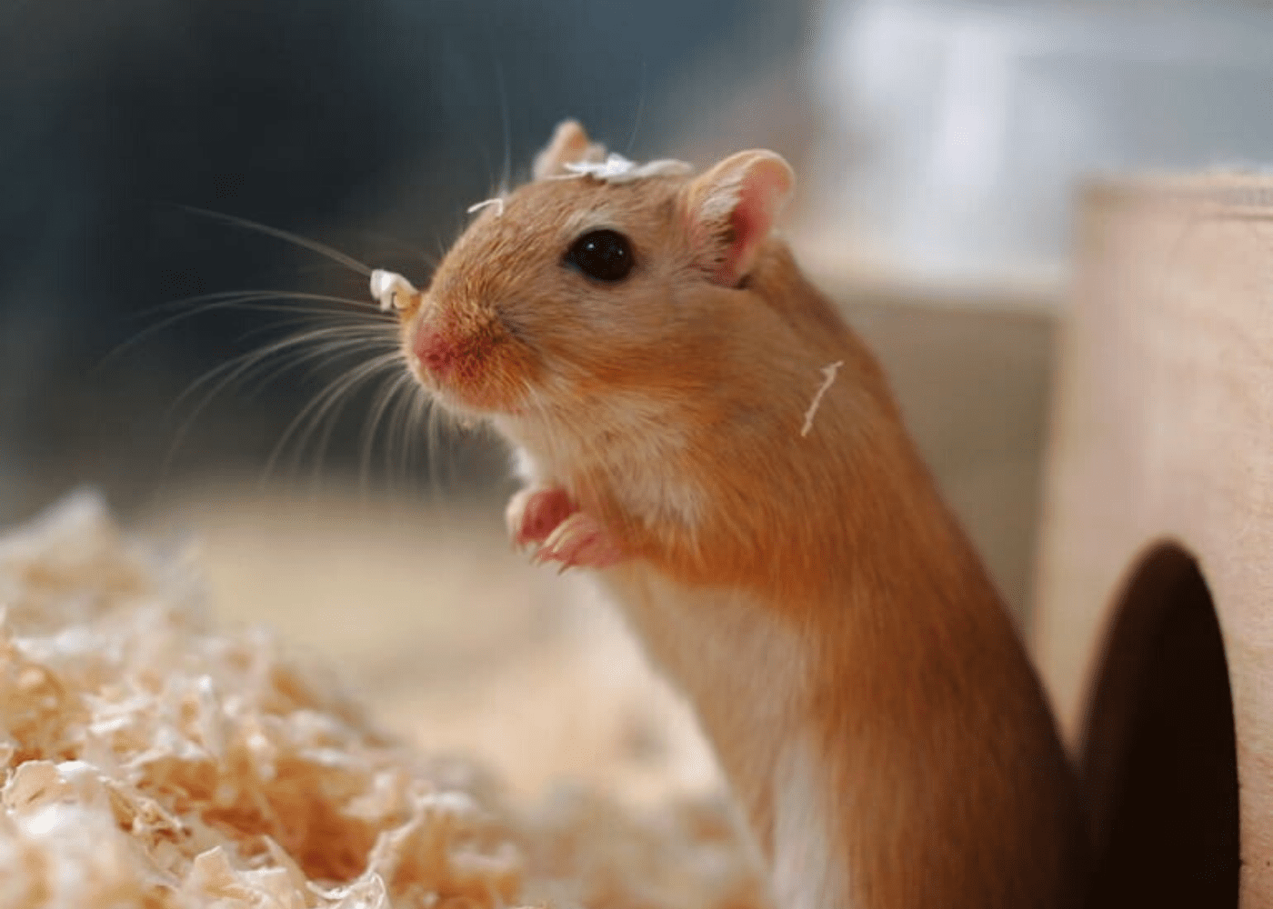 Small pets for kids in Singapore: Mice