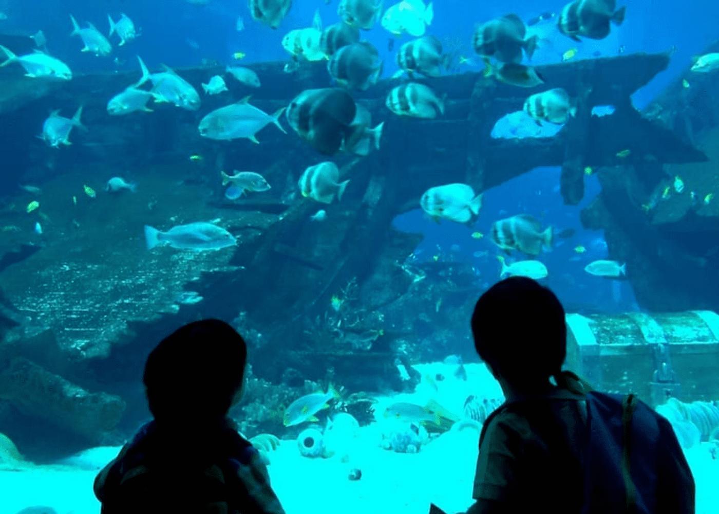 s.e.a. aquarium   Annual memberships in Singapore worth getting