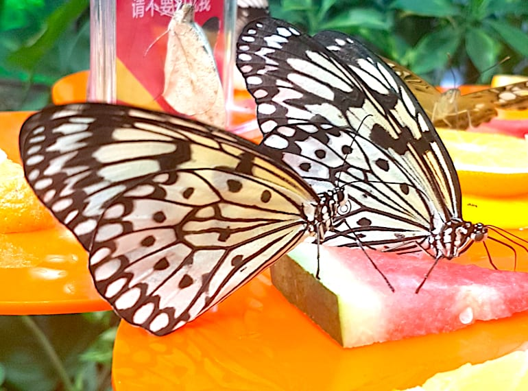 Butterflies up close Science centre Singapore Honeykids Asia