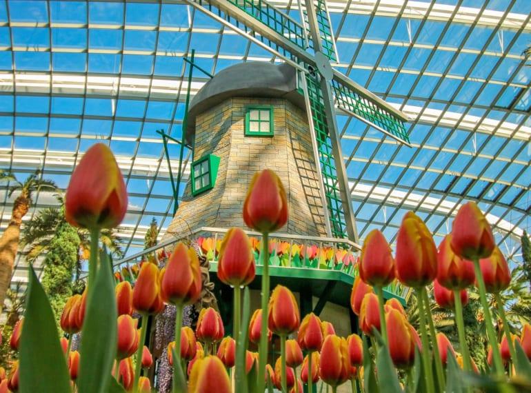 tulipmania museums and exhibits Honeykids Asia Singapore