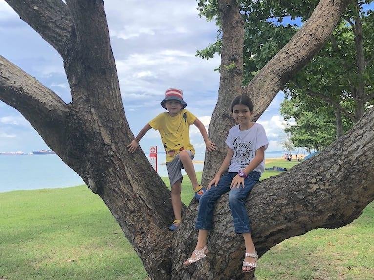 Trees | East Coast Park Guide
