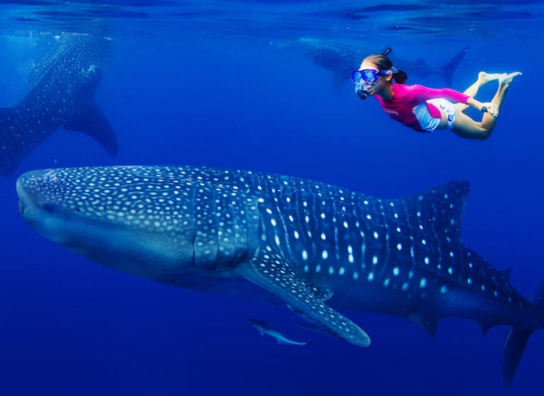 Family holiday to the Philippines: swimming with whale sharks in Oslob and hitting the beach in Mactan
