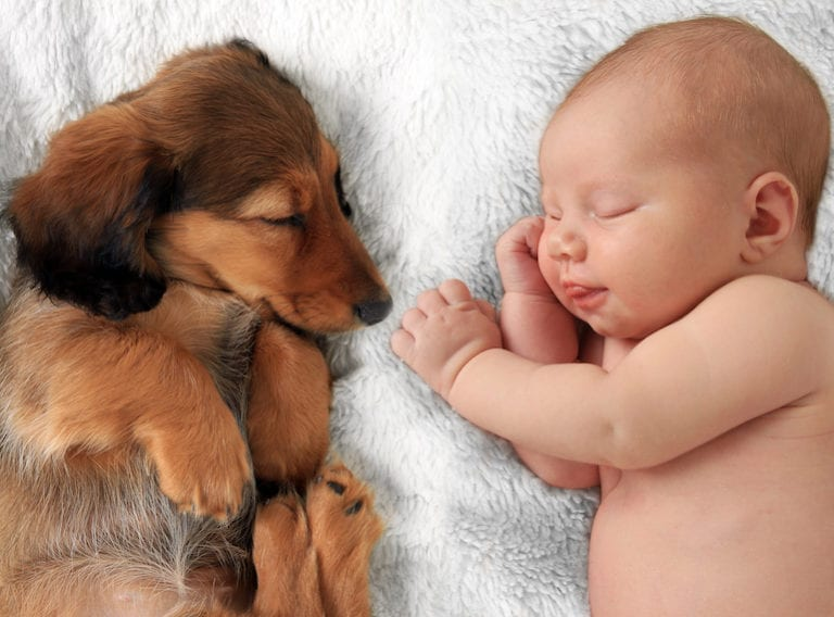 Pets and new babies: introducing your dog to the newest family member