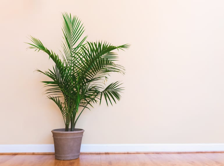 best plants to grow indoors in Singapore