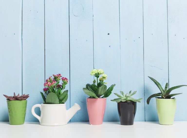 Mum-friendly gardening: best indoor plants to grow in Singapore