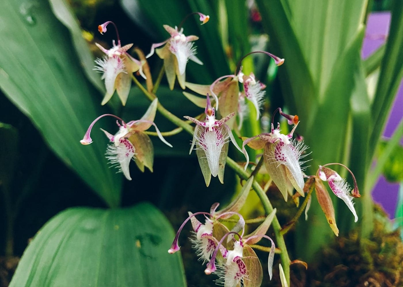 Things to do this weekend: Gardens by the Bay Orchid Extravaganza