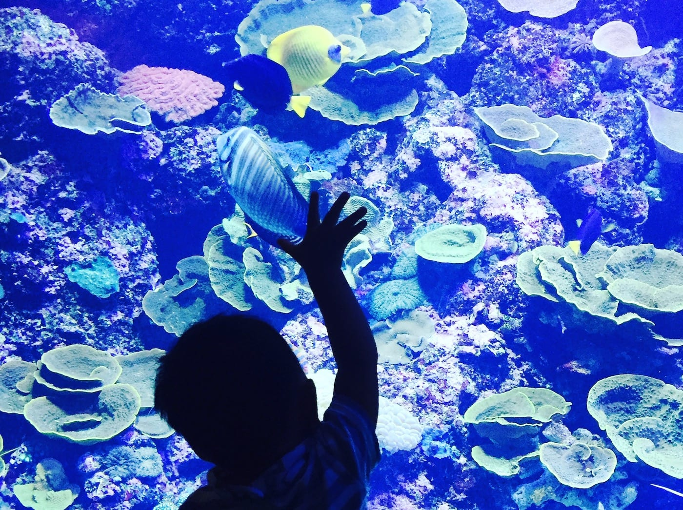sentosa with kids sea aquarium